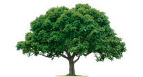 home_tree